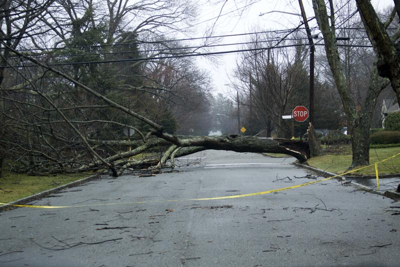 Downed trees and overgrown brush can harm electrical infrastructure.