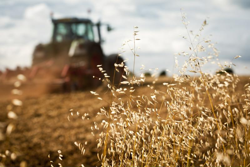 crops close up with tractor in the background