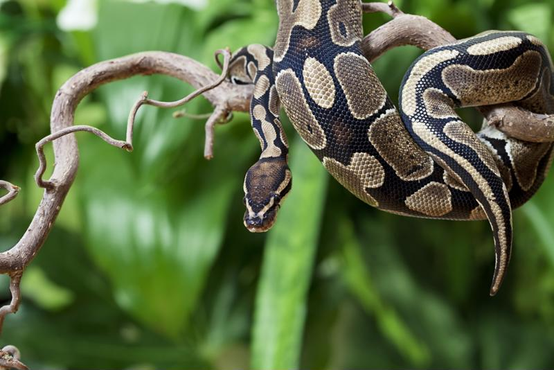 Snakes aren't uncommon in the water, but green mambas are, native to Africa.