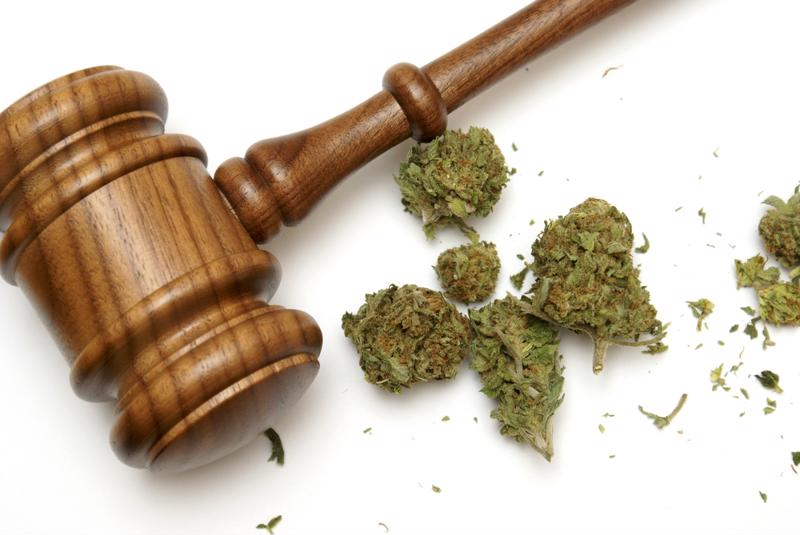 Marijuana next to a judge's gavel.