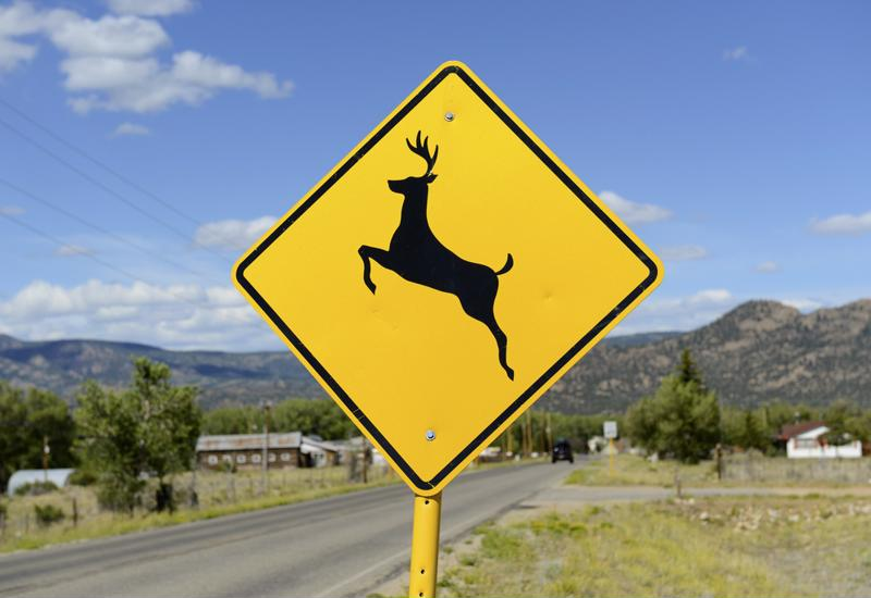 A deer crossing sign is the quickest way to determine if there's a high wildlife presence.